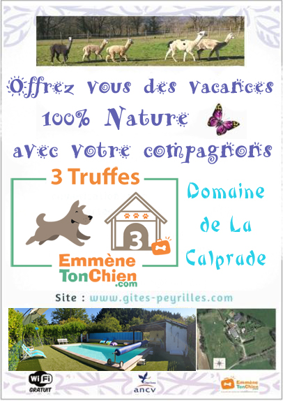Flyers chiens